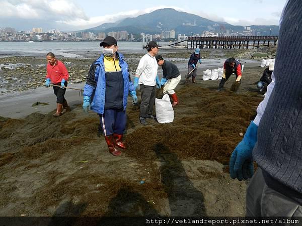 20120321 淡水河馬尾藻漂入及食物網採樣 謝蕙蓮攝 015 八里左岸