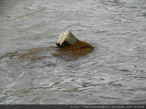 20120321 淡水河馬尾藻漂入及食物網採樣 謝蕙蓮攝 039 竹圍