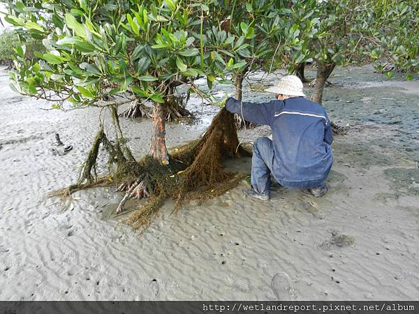20120321 淡水河馬尾藻漂入及食物網採樣 謝蕙蓮攝 041 竹圍