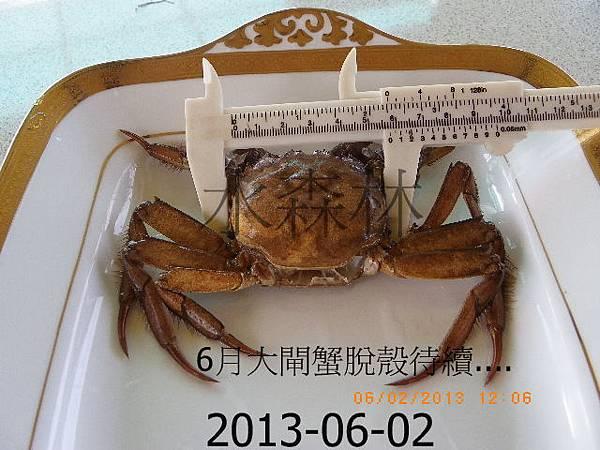 綠塘養殖蟹攝影篇 045