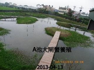 綠塘養殖蟹攝影篇 012