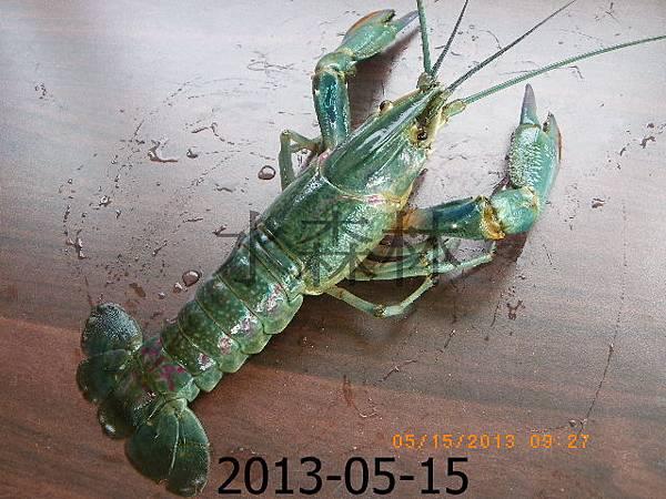綠塘養殖蟹攝影篇 039