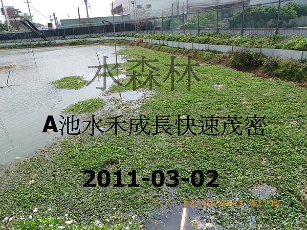 100年慶大閘蟹成長過程記錄-3 001.jpg
