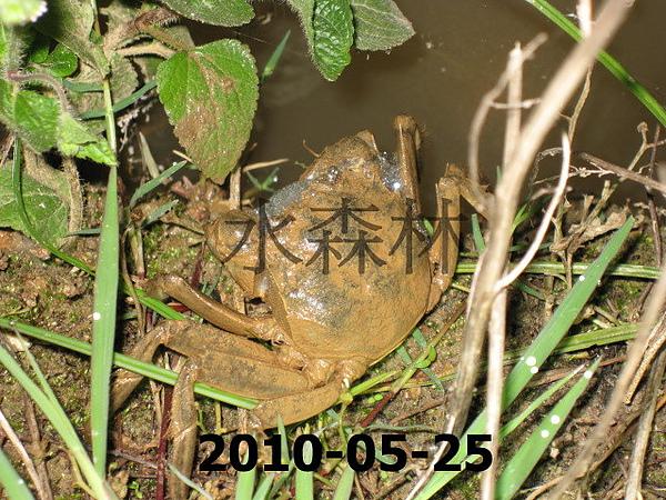 水森林生態綠塘 271.jpg