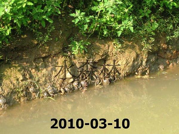 水森林生態綠塘 141.jpg