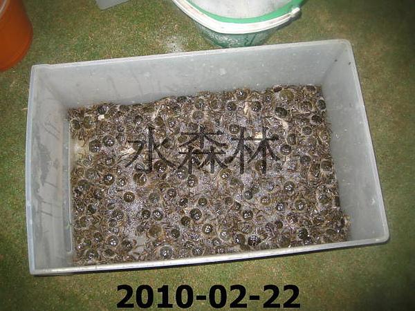 水森林生態綠塘 109.jpg