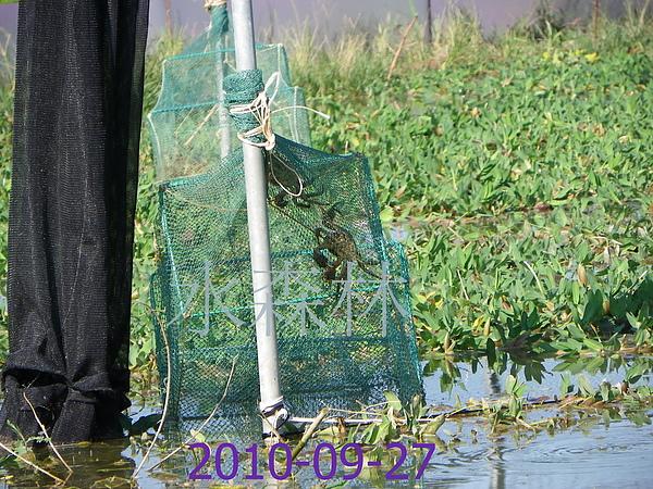 水森林蟹 011.jpg