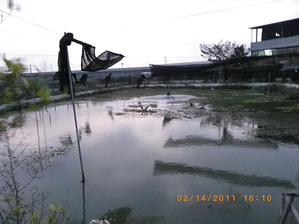 100年慶大閘蟹成長過程記錄 008.jpg