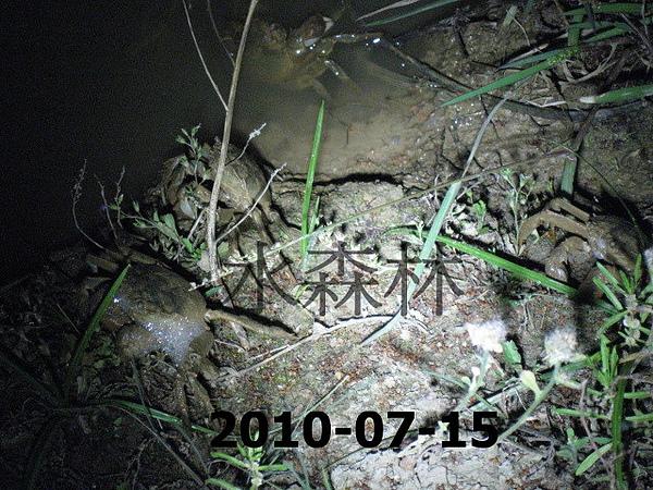 水森林生態綠塘 278.jpg