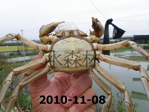 水森林蟹-8-2.jpg