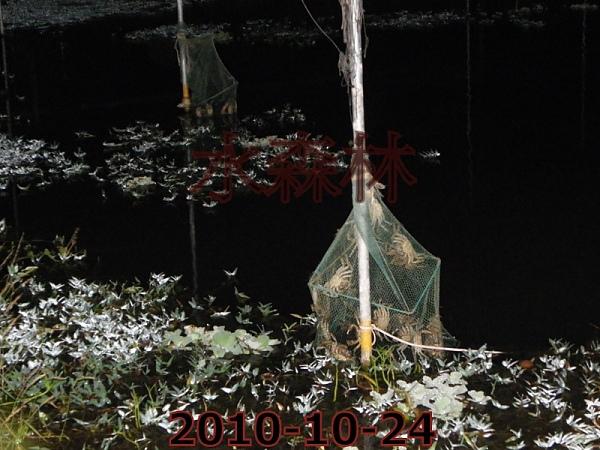 水森林原生態綠塘