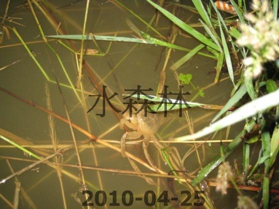 水森林生態綠塘 223.jpg
