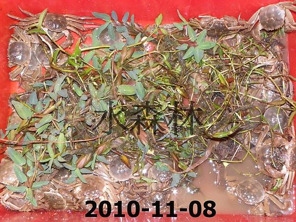 水森林蟹-8 004.jpg