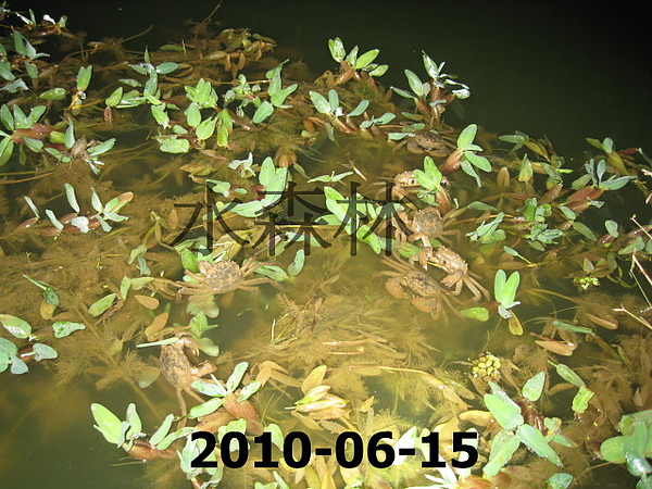 水森林生態綠塘 017.jpg