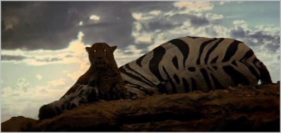 leopard-11