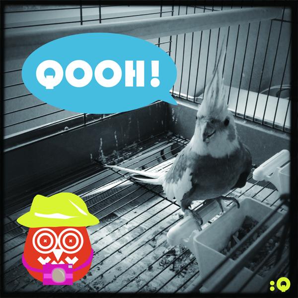 QOOH_f1_1
