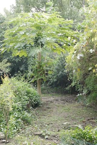 Garden0002