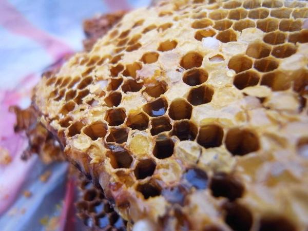 可口的蜂蜜.JPG
