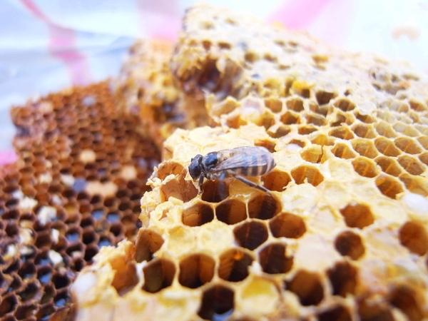 蜂蜜上的蜜蜂.JPG