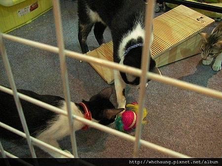 1010715寵物用品展SANY0004 (23)