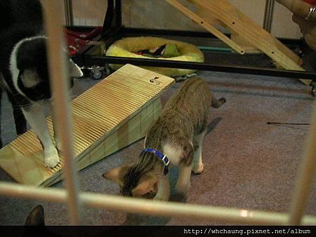 1010715寵物用品展SANY0004 (24)