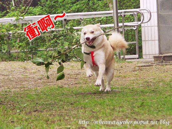 PICT8143_1.jpg