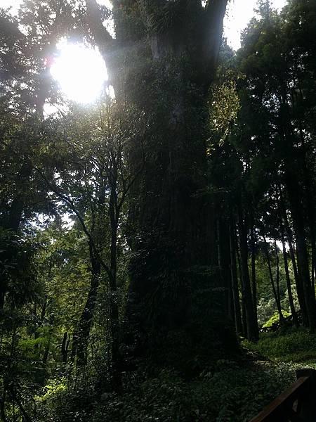 20110712阿里山家族旅遊~神木群芬多精