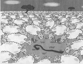 sheep_without_shepherd