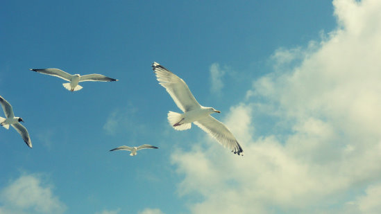 sea_gull_1_by_MarjOlijn.jpg