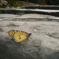 蝴蝶也愛清爽的石階
