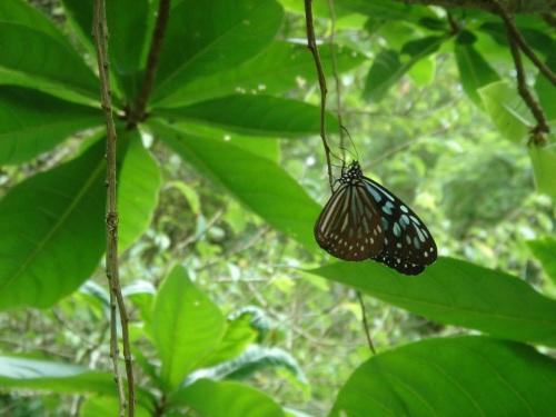 華陶窯。蝴蝶真美