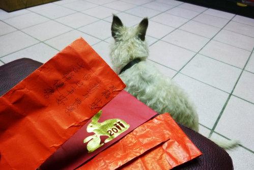 Feb. 11|小安得人疼,紅包好幾枚,可以買好多餅乾吃。