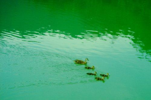 梅花湖。母子