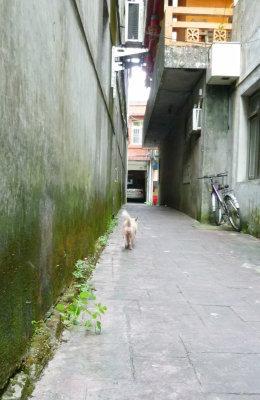 坪林。老街