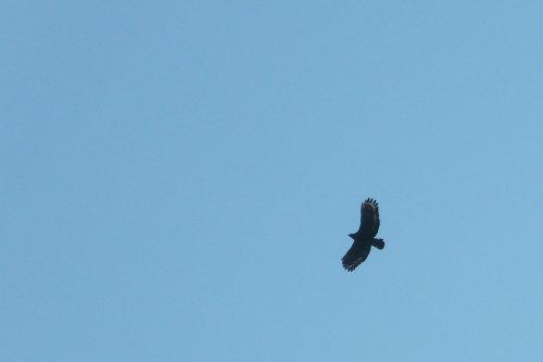 Feb. 26|角板山。鷹