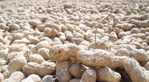 土豆的日光浴