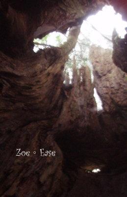 在樹中獨享天光