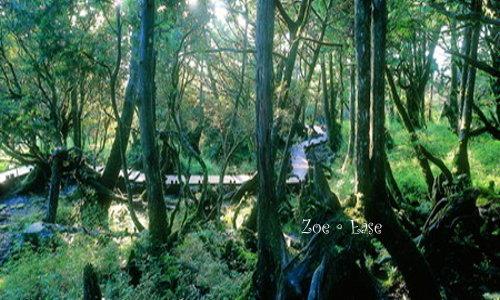 旅程隨處可見的老照片-翻拍-後山原始森林