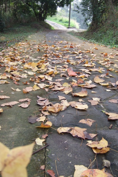 秋天都過了