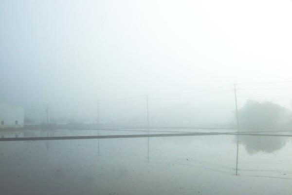 Feb. 23 濃霧遮蔽前方公路的疾駛車流,隔出一片水墨畫般的靜謐空間。