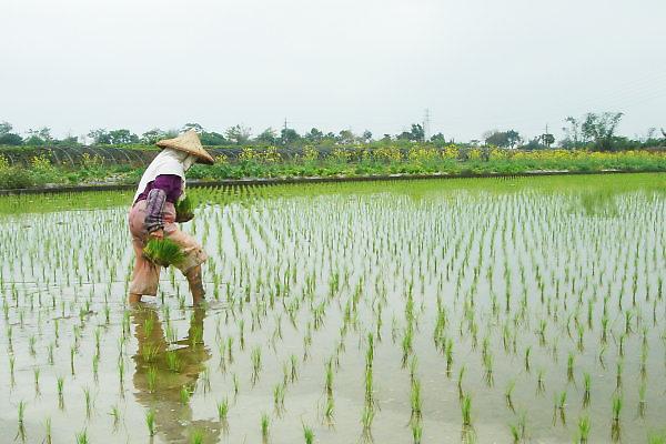珍珠社區。農人
