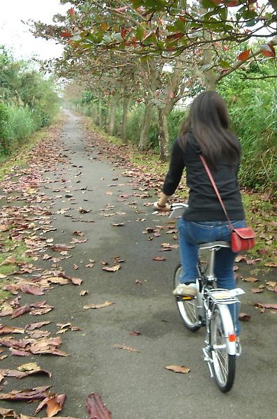 冬山河自行車道。枯葉區.