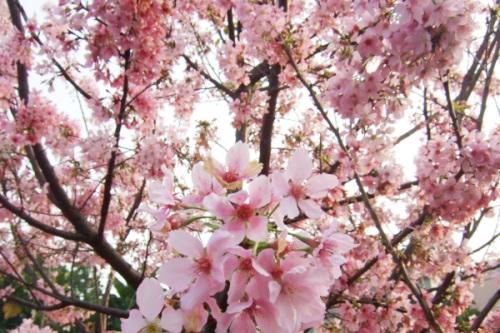Feb. 6 花朵