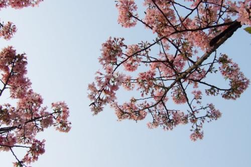 粉色系的上空