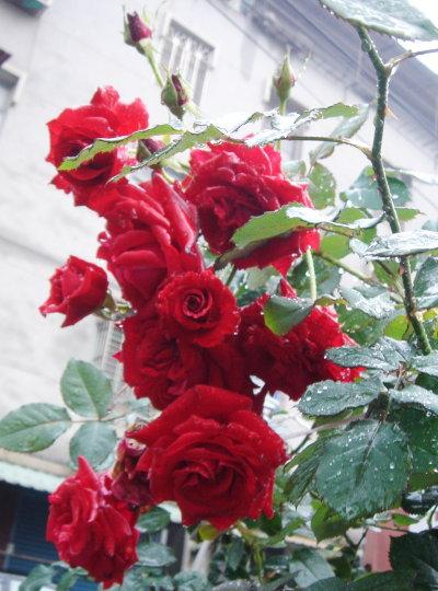 Mar. 13 嬌滴滴的花兒。