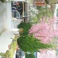 Feb. 28|汶水。春漸暖,花也開
