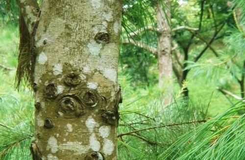 華陶窯。樹有熊掌