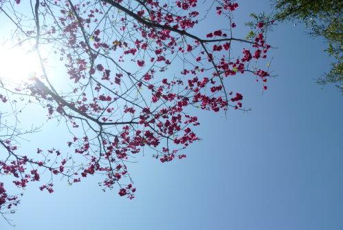 Feb. 26|角板山。花
