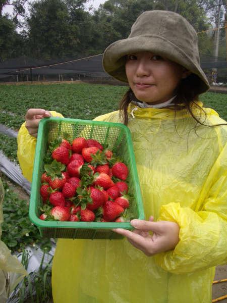 我是採草莓達人!!