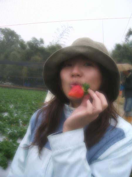 一定要浪漫的草莓照!!